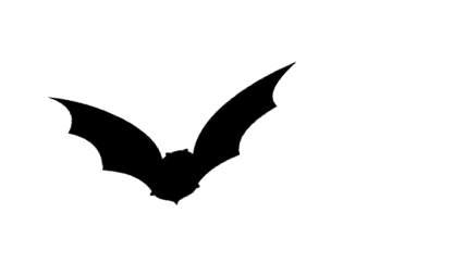 Gauteng North Bat Interest Group